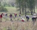Видео от акцията по залесяване на Сливнишката гора - април 2009