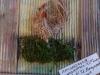 slivnitsa-den-na-zemiata-13